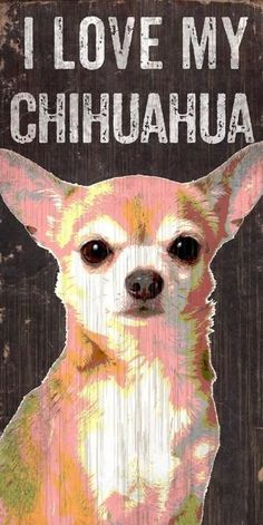 Chihuahua Dogs Pet Sign Wood I Love My Chihuahua - These wood signs are perfect for displaying around the house or office and include a piece of rope attached to the back for hanging. They are in size and thick. Made By Fan Creations. I Love Dogs, Cute Dogs, Rat Terrier, Chihuahua Puppies, Chihuahua Quotes, Teacup Chihuahua, Dog Quotes, Golden Retriever, Little Dogs