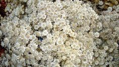 PAISAGISMO LEGAL: A beleza das Flores Secas do Cerrado