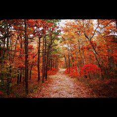 A quite #walk through the #woods in #CapeCod, #Massachusetts this #fall