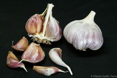 BROWN TEMPEST - Our best producing Glazed Purple Stripe variety. Purple bulb splotches, brown cloves with a hint of rose blush and no stripes. Average 6 cloves per bulb with nice shape and size. Raw garlic has initial hot taste that mellows to a pleasing garlicky finish. This variety is easy to peel in the kitchen.