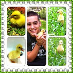 Baby duck! :)