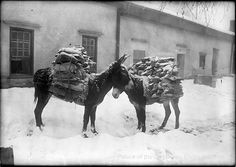 """pogphotoarchives: """" Burros loaded with firewood, courtyard of Palace of the Governors, Santa Fe, New Mexico Photographer: Jesse Nusbaum Date: 1910 - Negative Number 012745 """" Alaska Day, New Mexico History, Land Of Enchantment, Moorish, Santa Fe, Medieval, Moose Art, Black And White, Firewood"""