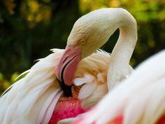 Flamingo, My Photos, Animals, Flamingo Bird, Animales, Animaux, Flamingos, Animal, Animais