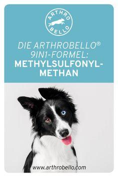 Als Teil der 9in1-Formel ist der Wirkstoff Methylsulfonylmethan unabdinglich für die Bildung von Kollagen und trägt positiv zur Festigung der Knorpel Ihres Vierbeiners bei. Movies, Movie Posters, Collages, Education, Pet Dogs, Films, Film Poster, Cinema, Movie