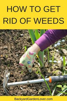 Wonder how to get rid of weeds for good? These tips will help you identify and remove weeds from your vegetable garden, flower beds and even from your lawn, without the use of harmful chemicals. See how you can have a weed free garden naturally. #gardening #organic #natural #weedfree #vegetablegarden