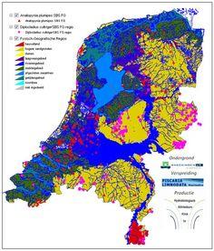 laag nederland - Google zoeken