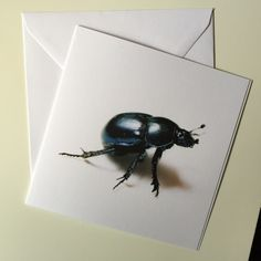 Kort: Bille 2 Insects, Bee, Animals, Animales, Animaux, Animal, Animais, Dieren