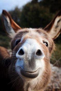 Eine lustige Esel