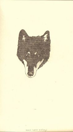 wolf by Peter Carrington, via Flickr