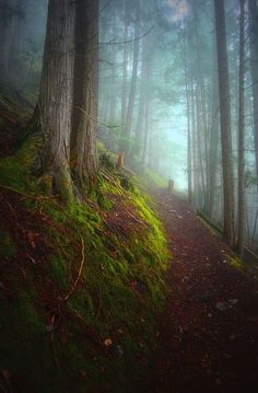 Forest Mysteries 3 is a photograph by Tara Turner. Fog along the Kuskanax Mountain Trail in Nakusp, BC Canada. Source fineartamerica.com