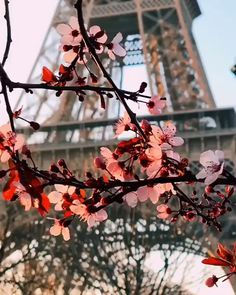 Springtime is peeking through in Paris! 🇫🇷 Get our guide to spending a long week. Springtime is peeking through in Paris! 🇫🇷 Get our guide to spending a long weekend in Paris and London at the link in bio! Paris Video, Hello France, Destination Voyage, South America Travel, Paris Photos, Photo Location, Paris Street, Travel And Leisure, Luxury Travel