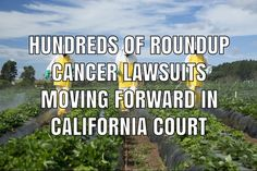 A California judge will allow hundreds of lawsuits filed over the link between Roundup weed killer and cancer to move forward in federal court. Product Liability, Weed Killer, To Move Forward, In Law Suite, Trials, Cancer, California, Link, Federal