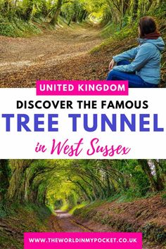 Halnaker Windmill Trail – Discover the Fairytale Halnaker Tree Tunnel near Chichester - The World in My Pocket Austria Travel, France Travel, Tree Tunnel, Cruise Tips, Travel Usa, Travel Guides, Beautiful Gardens, Travel Photos, Travel Inspiration