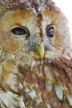 Another great owl pic!
