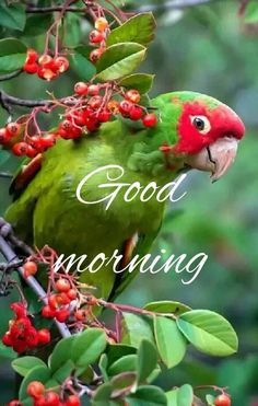 I have shared huge collection of Good Morning Images, Good Morning Pics, Good Morning Pictures & Good Morning Illustrations. Good Morning Gif Images, Good Morning Flowers Gif, Good Morning Beautiful Pictures, Good Morning Nature, Good Morning Funny Pictures, Cute Good Morning, Morning Wish, Good Morning Animals, Good Morning Wallpaper
