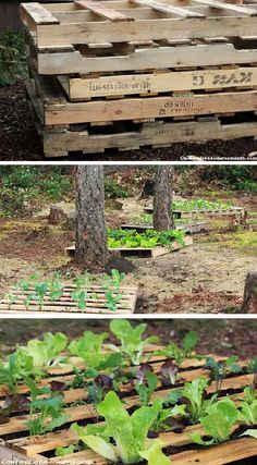 pin by mirabelle on crate gardening club pinterest crates