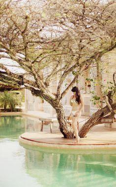 pool and tree