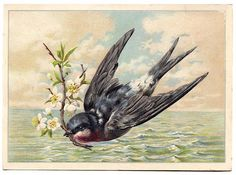 Antique Image - Swallow flying across The Sea - The Graphics Fairy