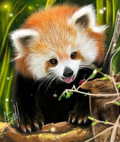 Red Panda (my art)