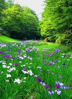 De velden die we nog niet onder onze hoede hebben, kunnen we natuurlijk wel zomaar een hoop bloemenzaden strooien?