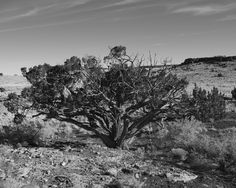 Black and White Photography of the West