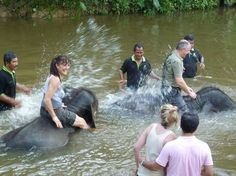 Elephant sanctuary - ride, fee, bathe elephants. All day excursion - 107 USD for groups of 3 or more - includes transportation to/from hotel.
