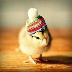 21 Best Little Chickens Images In 2019 Baby Chicks Baby