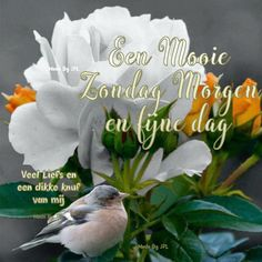 Good Morning, Qoutes, Hugs, Animals, Sunday, Buen Dia, Quotations, Big Hugs, Quotes