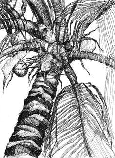 palm tree coloring sheets Palm