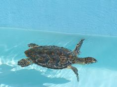 Learning About: Sea Turtles