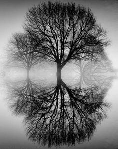 Ansel Adams like photo...black and while trees