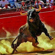 El toro es una animal importante en España. Cada año los españoles celebran la corrida de toros. - Sara Ósk