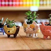 Fun art show idea to plant succulents in glazed pottery
