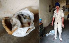 Police Officers in India Accused of Cooking Cats and Dogs - Two Nagaland Armed Police constables are facing disciplinary and legal action for allegedly cooking in their barracks cats, dogs and at least one langur. http://thenortheasttoday.com/no-end-to-brutal-animal-killings-2-naga-constables-accused-of-cooking-catsdogs-in-delhi/