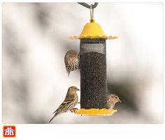 Attract birds to your outdoor living space with bird feeders.