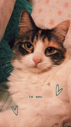 Creative Instagram Stories, Instagram Story Ideas, Ig Story, Insta Story, Dog Tumblr, Insta Photo Ideas, Story Inspiration, Cat Lovers, Animals