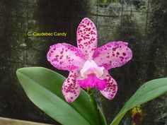 C.-Caudebec-Candy.jpg (4320×3240)