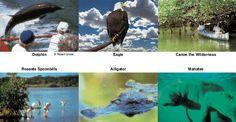 Everglades boat rentals and everglades boat tours of Everglades National Park Florida