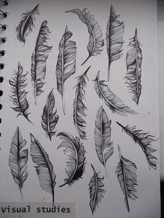 feathers draw...tattoo?