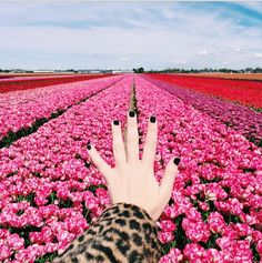15 Colorful Snaps To Step Up Your Summer Insta Game  #refinery29  http://www.refinery29.com/los-angeles-summer-instagrams#slide-6  We love the juxtaposition of a leopard coat and black nail polish with vibrant pink flowers.