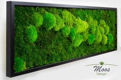Moss Wall Art, Moss Art, Confused Images, Island Moos, Hydrangea Seeds, Track Pictures, Cozy Backyard, Natural Interior, Plant Wall