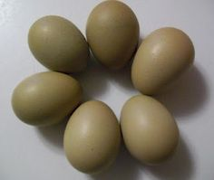 Olive Egger is a cross bred bird - most often the result of a dark brown egg bird (like a Marans) crossed with a blue egg bird (such as an Ameraucana). The laying hens may not look like a distinctive breed, but their eggs will be olive green.