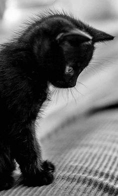Beautiful black cat ♥️