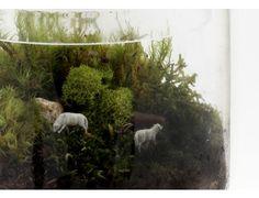 """Grazed and Confused"" Moss Terrarium"