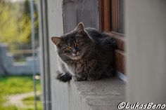 Cat on the window by LukasBeno. @go4fotos
