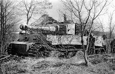 Tiger 1 under camouflage
