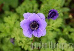 Five bulbs to plant for lasting  Spring color!
