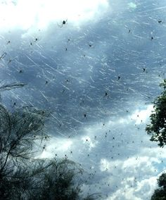 Australian Town Completely Covered in Cobwebs after Millions of Spiders Rain from the Sky