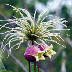 Preciosas fotos de flores