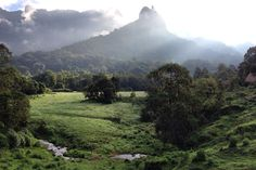 The view from Bale Mountain Lodge. Image by Helen Elfer / Lonely Planet